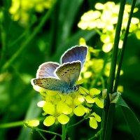 луговые цветы :: Александр Прокудин