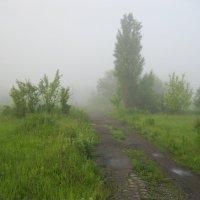 Туман :: анатолий томас
