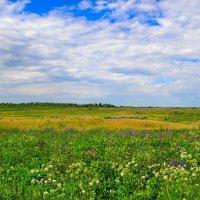 Русское поле в июне :: Милешкин Владимир Алексеевич
