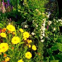 Разноцветье :: Люша