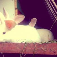 Кролик :: Вероника Озем