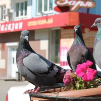 Птички) :: Артём Сибиряков