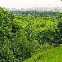 Зелёное море лета. :: Игорь Герман
