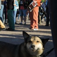 джаз стрит пёс :: sv.kaschuk
