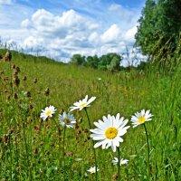 """""""...А я по лету босиком в луга зелёные,  В разнотравье, в ковыли, в цветочный рай...."""" :: Galina Dzubina"""