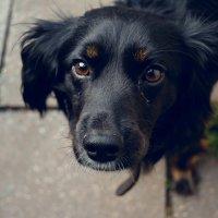 Сладкая собака :: Света Кондрашова