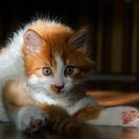 Кошачья йога :: Александр Бойко