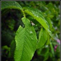 дождливый июнь :: Дмитрий Анцыферов