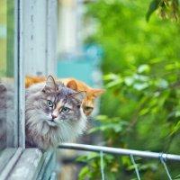 Прогулка городских котиков :: Оксана Арискина