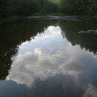 лесное зеркало :: Евгения Куприянова