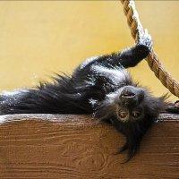 обезьянка :: Kristi K.