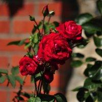 цветение :: Августа