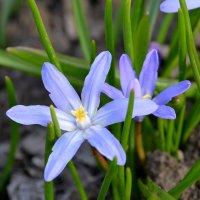 Весна :: Алёнка М.