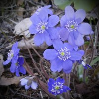 Весенний букет :: lady v.ekaterina