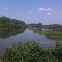 Лето в деревне. :: Андрей Нелюбов