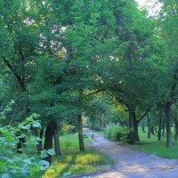 Утро в парке :: Юрий Гайворонский