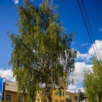 дерево :: Артём Бояринцев