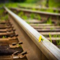 Life Path :: Евгений Балакин