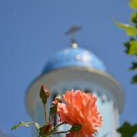 Розы у храма :: Николай