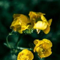 Цветочки :: Рамиль Ахметов
