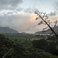 Необычное дерево ну и конечно горный пейзаж Тенерифе :: Виктор М