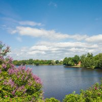 Сирень на озером Разлив 2 :: Виталий