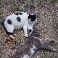 Спящие коты :: Kate Nowak