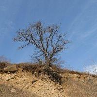 Дерево в селе Агверан :: Volodya Grigoryan