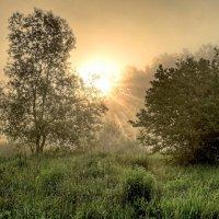 утро.туман. :: юрий иванов