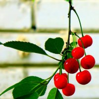 Вишни, вишни дразнят око, да растут высоко. :: Валентина ツ ღ✿ღ