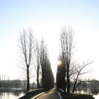 Аллея парка ранним утром, апрель 2016 год :: Andrey Photorover