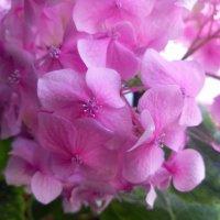Цветок :: Davit Petoyan