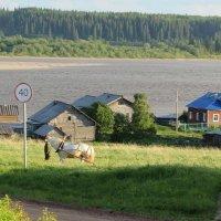 деревня Смоленец :: Александра Карпова