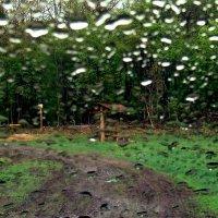 Весенний дождь :: Леонид Железнов