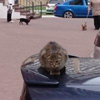 НЕ возможно спуститься на землю - окружают!!!!! :: Олег Каплун