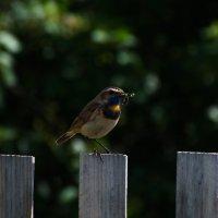 Кормящие птахи :: Валерий Жалабкевич