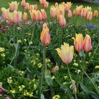 Тюльпаны и др. :: zoja