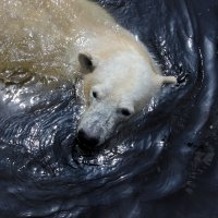 зоопарк вупперталь :: lora )))