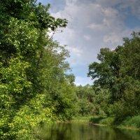 река Птичь, Беларусь :: Виктор _