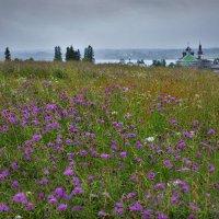 Горицы под дождем :: Валерий Талашов
