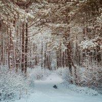 Сосновый лес :: Станислав Любимов