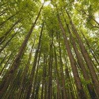 лес :: Александр Степанов
