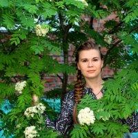 В рябине :: Анна Дорофеева