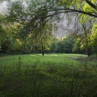 Зеленая поляна :: Дубовцев Евгений