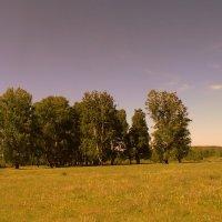 Полюшко - поле . :: Мила Бовкун