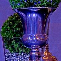 Синие-фиолетовое, но не философское   :: Natalia Mihailova