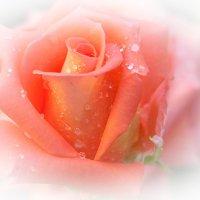 Дождь красоте не помеха :: Swetlana V