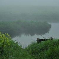Туман, туман... :: Владимир Щеглов