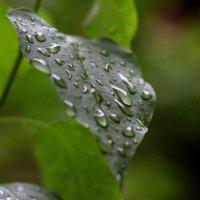 Дождь :: Lim .