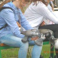 Девушка с голубями :: Александр Гусаров